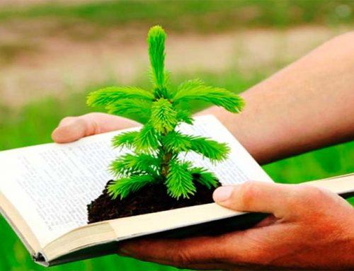 Desenvolvimento do Direito Ambiental